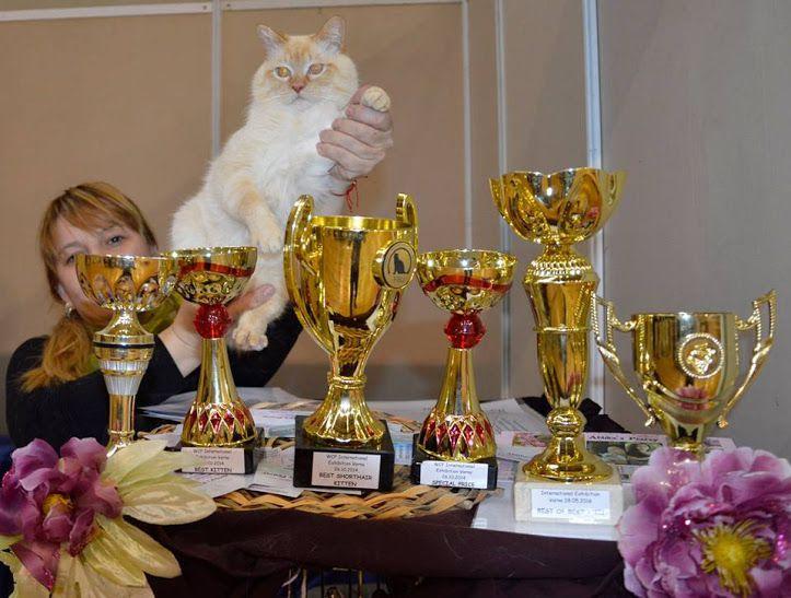 2. Снимка на Имаме котенца Летни цени Уникални породи