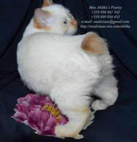 4. Снимка на Имаме котенца Летни цени Уникални породи