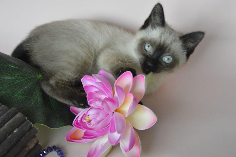 5. Снимка на Имаме котенца Летни цени Уникални породи