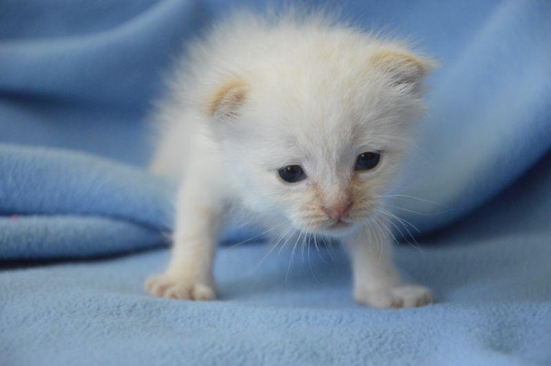 6. Снимка на Имаме котенца Летни цени Уникални породи