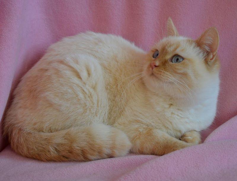 10. Снимка на Имаме котенца Летни цени Уникални породи