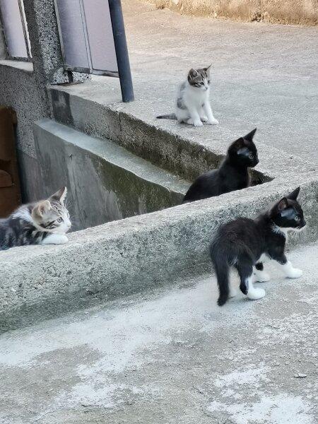1. Снимка на Подарявам котета