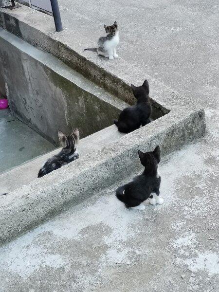 2. Снимка на Подарявам котета