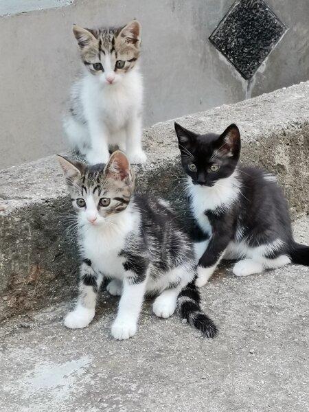 3. Снимка на Подарявам котета