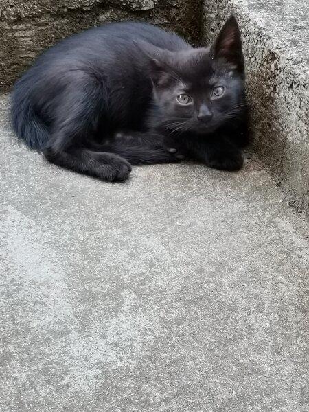 4. Снимка на Подарявам котета