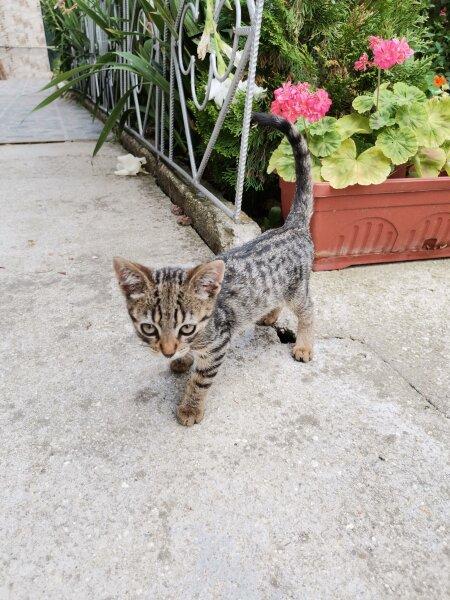 5. Снимка на Подарявам котета