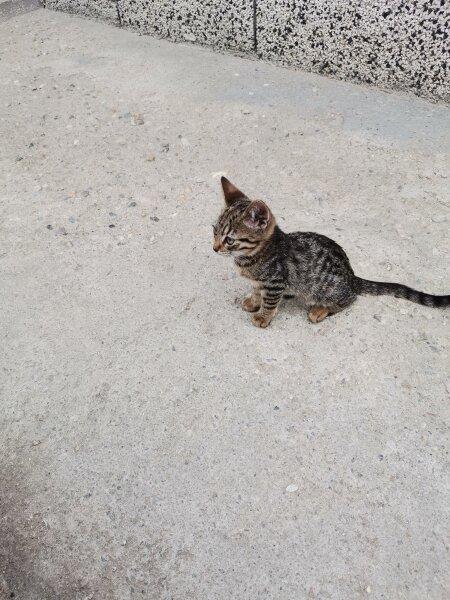 6. Снимка на Подарявам котета