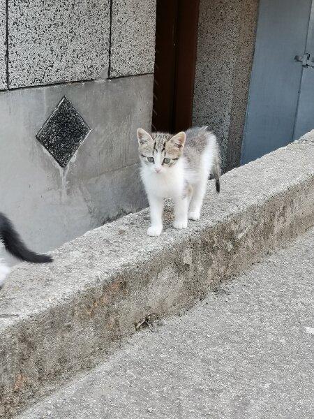 8. Снимка на Подарявам котета