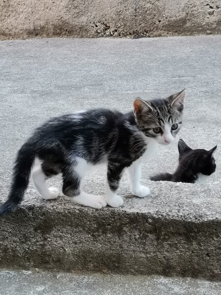 9. Снимка на Подарявам котета