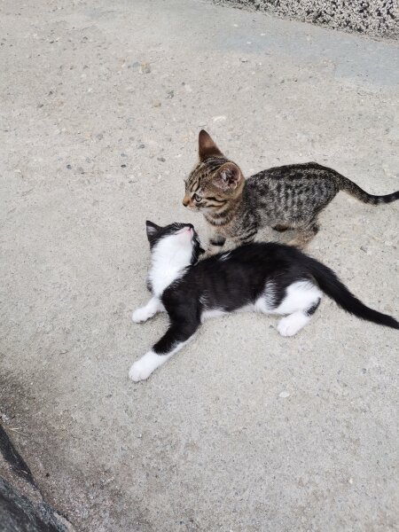10. Снимка на Подарявам котета